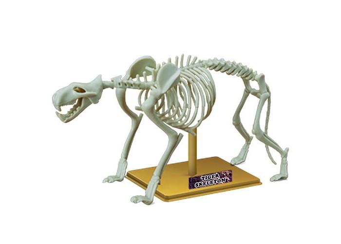 Конструкторы Eastcolight Сборная модель Science Time - Скелет тигра 12 элементов игрушка eastcolight скелет человека 28206