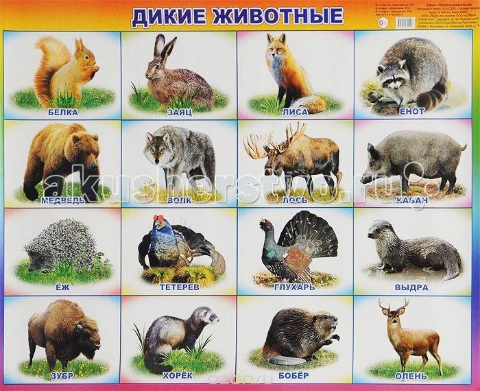 цены  Обучающие плакаты Алфея Плакат Дикие животные