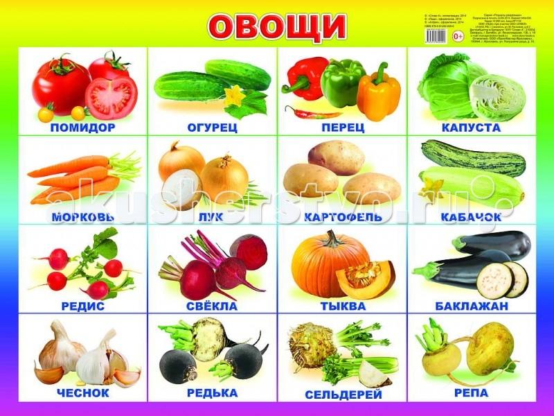 Обучающие плакаты Алфея Плакат Овощи  обучающие плакаты алфея плакат инструменты