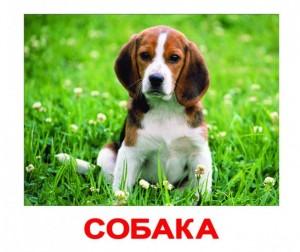 Купить Вундеркинд с пелёнок Набор обучающих карточек Домашние животные