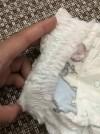 56696 Pampers Подгузники-трусики Pants Maxi р.4 (9-15 кг) 104 шт. от пользователя Ольга Горячева