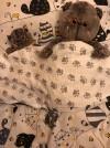 32237 AmaroBaby 1.5 спальное Time to Sleep Котики (3 предмета) от пользователя Марина