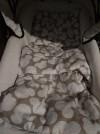 34913 AmaroBaby Комплект в коляску Mommy Star Мышонок (3 предмета) от пользователя Оксана