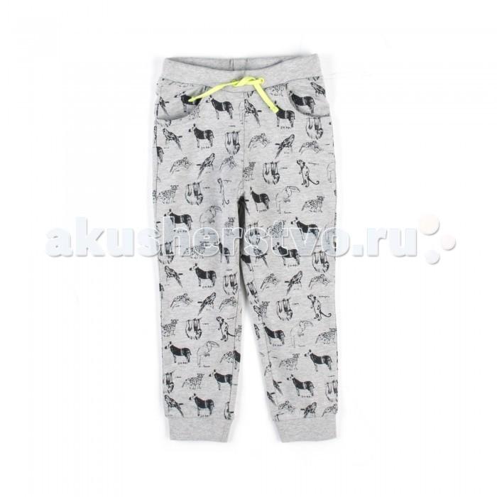 Детская одежда , Брюки, джинсы и штанишки Coccodrillo Штанишки для мальчика Jungle Explorer арт: 517966 -  Брюки, джинсы и штанишки