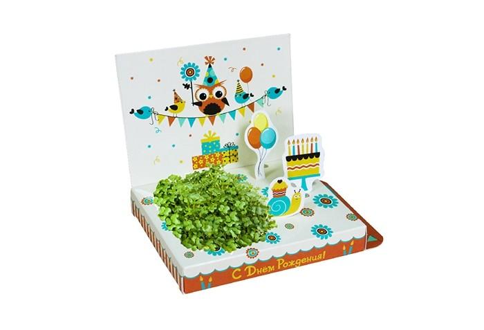 Наборы для выращивания Happy Plant Подарочный набор С Днём рождения! арт дизайн подарочный набор открытка с ручкой 0701 051