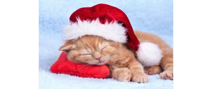 Картины по номерам Рыжий кот Картина по номерам Спящий новогодний котенок 40х50 см