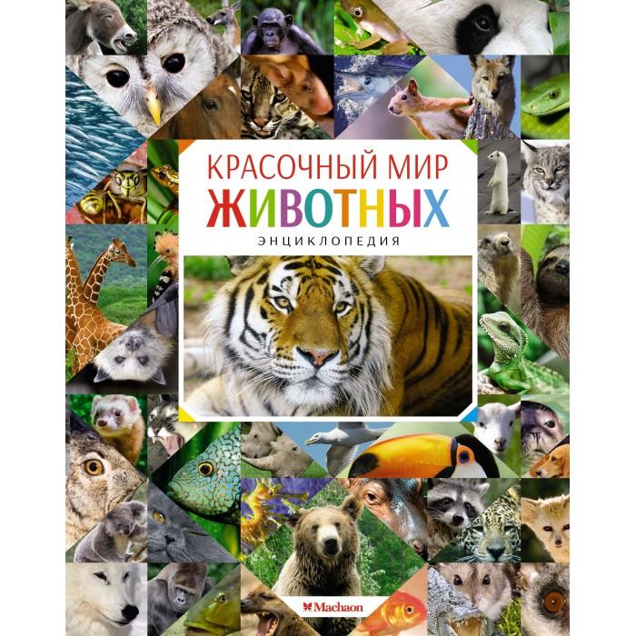 Махаон Энциклопедия Красочный мир животных