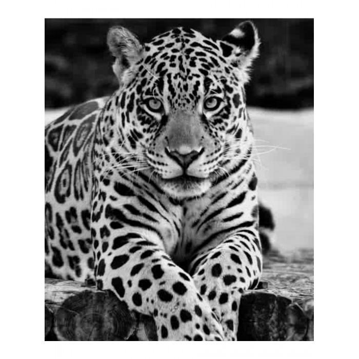Картины по номерам Котеин Картина по номерам Ягуар 30х30 см мозаика котеин маркетри картина на дереве лорд пес 20x20
