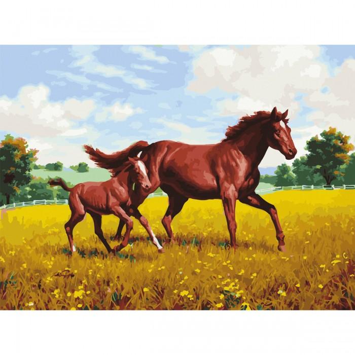 Остров Сокровищ Картина по номерам Лошади на лугу 40х50 см