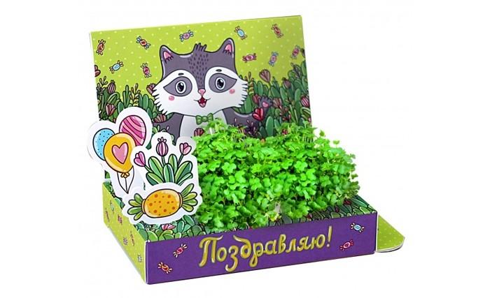 Наборы для выращивания Happy Plant Подарочный набор Живая открытка Поздравляю! арт дизайн подарочный набор открытка с ручкой творческой личности