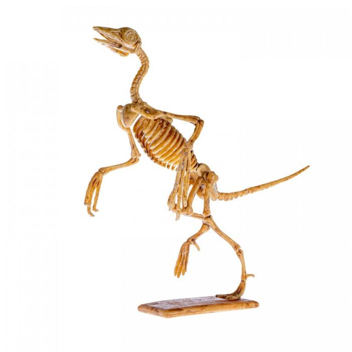 Фото - Наборы для опытов и экспериментов Bondibon Набор палеонтолога Динозавр Археоптерикс 3D скелет наборы для опытов и экспериментов color kit набор для проведения раскопок аллозавр