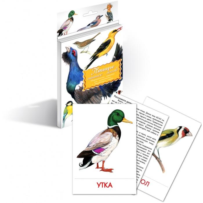 Раннее развитие Маленький гений Дидактические карточки Птицы наших лесов