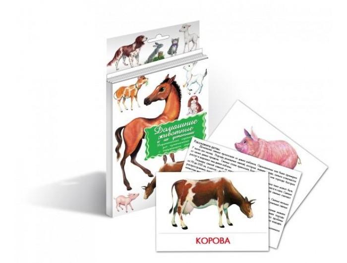 Раннее развитие Маленький гений Дидактические карточки Домашние животные дидактические карточки животные азии