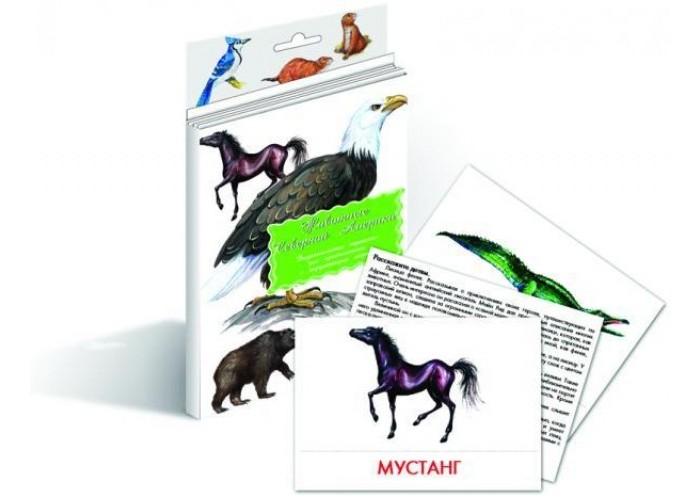 Раннее развитие Маленький гений Дидактические карточки Животные Северной Америки дидактические карточки животные азии