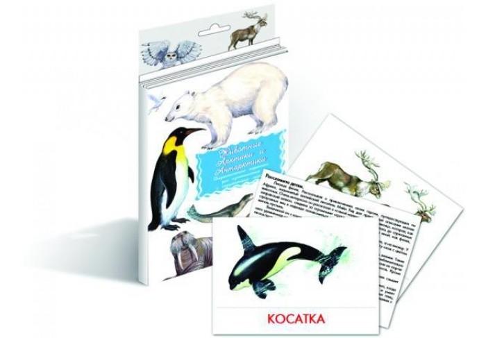 Раннее развитие Маленький гений Дидактические карточки Животные Арктики и Антарктики дидактические карточки животные азии