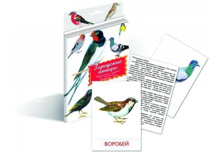раннее развитие маленький гений дидактические карточки головные уборы обувь Раннее развитие Маленький гений Дидактические карточки Городские птицы