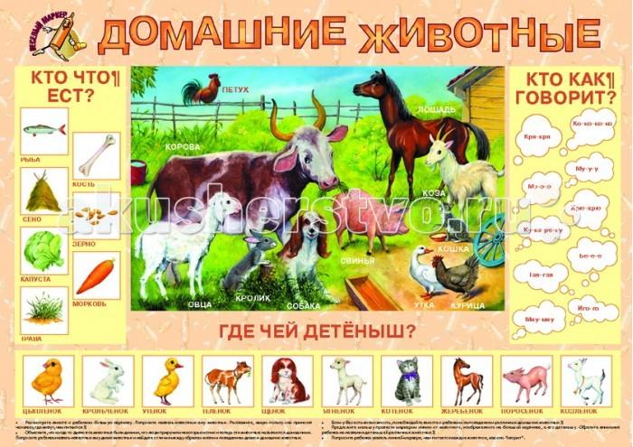 Обучающие плакаты Маленький гений Плакат Домашние животные 9005 обучающие плакаты алфея плакат азбука и счет на магнитах