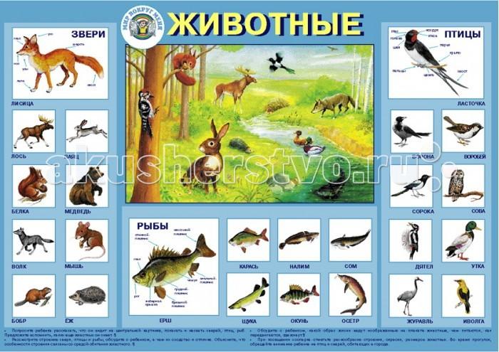 Обучающие плакаты Маленький гений Плакат Животные обучающие плакаты алфея плакат правила дорожного движения для детей