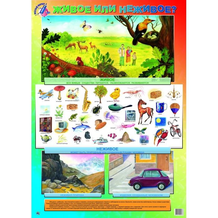 Обучающие плакаты Маленький гений Плакат Живое или неживое гений 2016 dvd