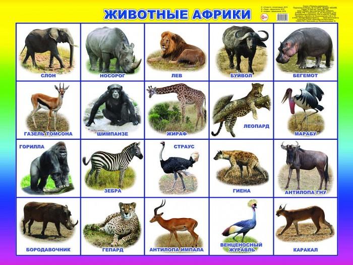 Обучающие плакаты Алфея Плакат Животные Африки
