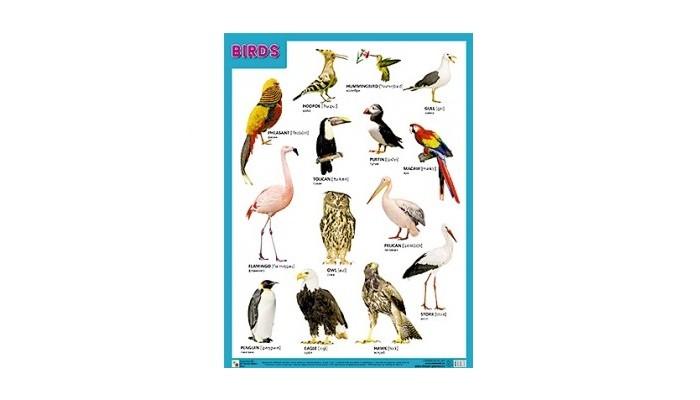 Обучающие плакаты Мозаика-Синтез Плакаты (англ) Birds (Птицы)