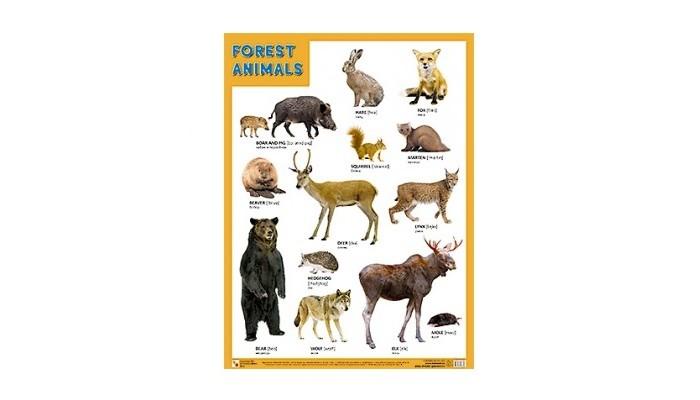 Обучающие плакаты Мозаика-Синтез Плакаты (англ) Forest Animals (Лесные обитатели)