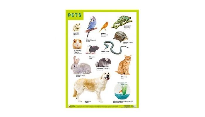 Обучающие плакаты Мозаика-Синтез Плакаты (англ) Pets (Домашние питомцы) плакаты по техники безопасности где
