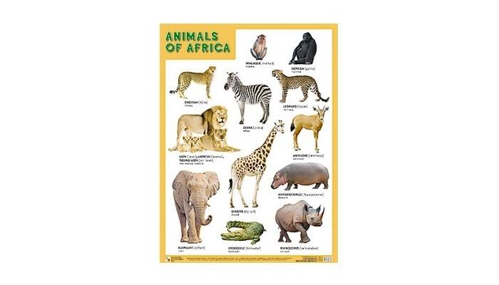 Обучающие плакаты Мозаика-Синтез Плакаты (англ) Animals of Africa (Животные Африки) плакаты по техники безопасности где