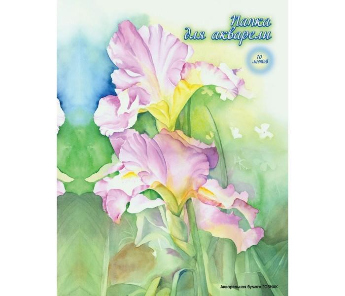 Принадлежности для рисования Action Папка для акварели палаццо папка для акварели флора а3 10 листов