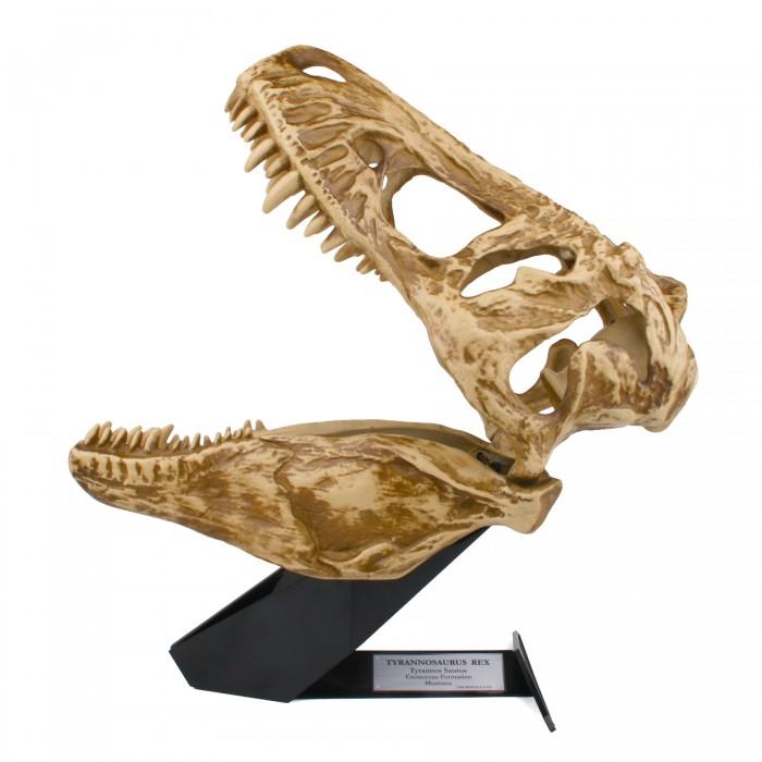 Светильник Uncle Milton Череп Тиранозавра In My RoomЧереп Тиранозавра In My RoomСветильник Череп Тиранозавра.   Настольный светильник в форме черепа Тиранозавра с проекцией на стену. Батарейки входят в комплект. Возраст: 6+<br>