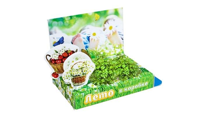 Наборы для выращивания Happy Plant Подарочный набор Живая открытка Лето в коробке арт дизайн подарочный набор открытка с ручкой творческой личности