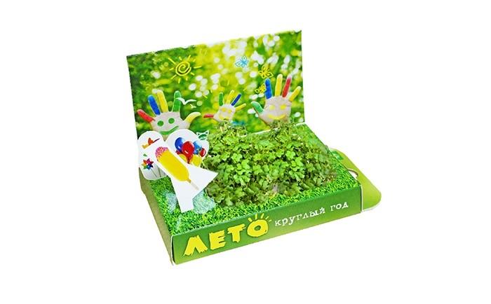 Наборы для выращивания Happy Plant Подарочный набор Живая открытка Лето круглый год арт дизайн подарочный набор открытка с ручкой творческой личности