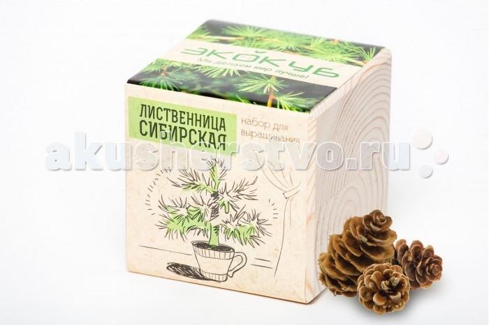 Наборы для выращивания Экокуб Набор для выращивания Лиственница наборы для выращивания растений вырасти дерево набор для выращивания шалфей
