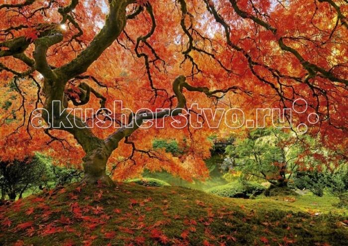 Пазлы Educa Пазл Осень в японском саду 1500 элементов