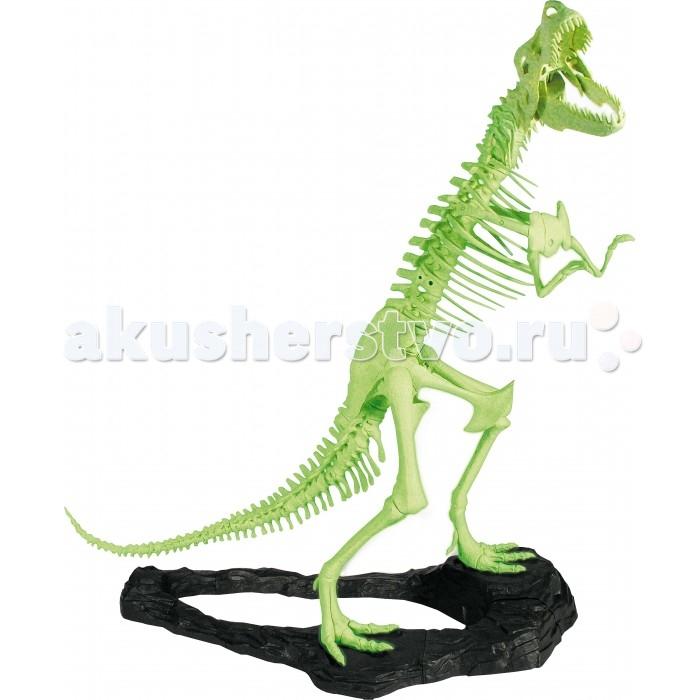 Конструктор Geoworld Georex - Тираннозавр Рекс (светится в темноте)Georex - Тираннозавр Рекс (светится в темноте)Этот набор подарит вам возможность собрать потрясающую модель скелета тираннозавра рекса в масштабе 1/8, то есть 140 сантиметров в высоту. Модель будет светиться в темноте: для этого ей достаточно весь день постоять на свету и тогда, с наступлением сумерек, вы увидите, как она начинет светиться зеленым, становясь тем ярче, чем темнее в комнате. Модель имеет музейное качество, так как набор разрабатывался при участии ученых-палеонтологов. Дизайн и концепт набора создан непосредственно в Италии, под руководством доктора палеонтологических наук Стефано Пичини – основателя компании Geoworld. В наборе вы найдете буклет со множеством увлекательной и познавательной информации о тираннозаврах рексах. Для самой модели в комплекте находится роскошная устойчивая подставка. Буклет, коробка и другие материалы русифицированы.  Комплект:   Детали для сборки скелета;  Подставка; Инструкция по сборке; Буклет.   Особенности:  Размер упаковки: 36 х 26 х 26 см Размер собранной модели: 140 х 88 см<br>