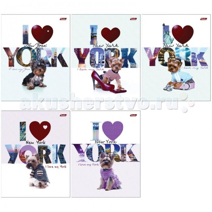 Тетради Hatber Тетрадь I love York А5 (48 листов) цены онлайн