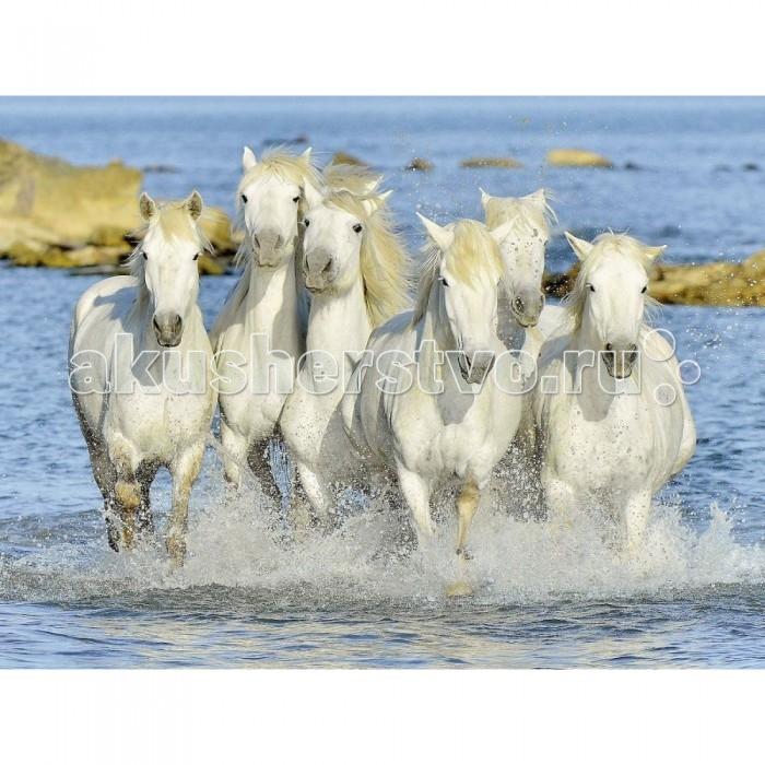Ravensburger Пазл Рысью в прибое 1500 элементовПазл Рысью в прибое 1500 элементовRavensburger Пазл Рысью в прибое 1500 элементов 16285  Пазл Рысью в прибое представлен в виде набора для сборки красивой картинки с изображением бегущих белых лошадей. Пазл состоит из 1500 элементов. Шесть резвящихся лошадок поднимают фонтаны брызг вокруг себя. У них красиво развиваются гривы на ветру. Их окружает прозрачная прохладная вода. У лошадок стройные гладкие тела и удлиненные мордочки. Они бегут быстрой рысью куда-то в неведомые дали. Картинка выглядит довольно реалистично, кажется, что холодные брызги воды попадут на лицо.  Элементы пазла выполнены из качественного картона, каждая деталь обладает своей определенной формой и подходит только на свое место. Сборка пазла способствует развитию координации движений, усидчивости, наблюдательности, образного мышления и цветового восприятия.   Готовое изображение можно повесить на стену и украсить интерьер любой комнаты.  Размер собранного поля: 80 х 60 см.<br>