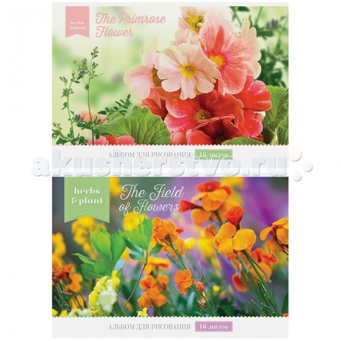 Принадлежности для рисования Спейс Альбом для рисования Цветы 16 листов спейс альбом для рисования животные another part 24 листа