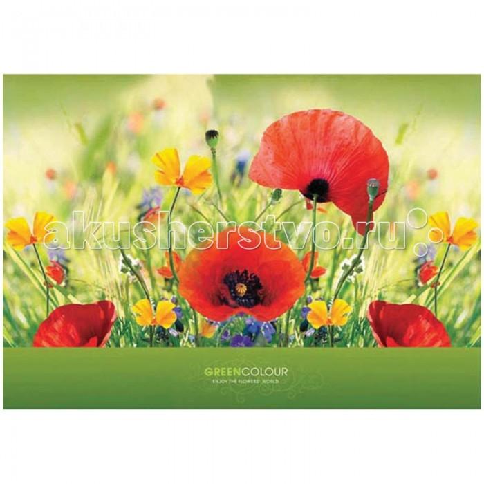 Принадлежности для рисования Спейс Альбом для рисования Яркие цветы 24 листа принадлежности для рисования спейс альбом для рисования авто яркие внедорожники 24 листа