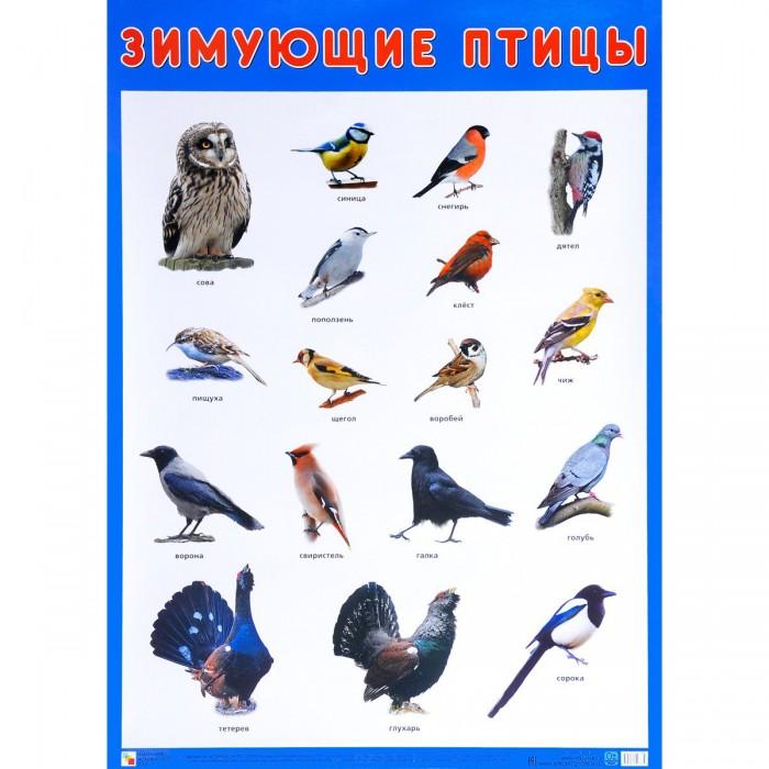 Обучающие плакаты Мозаика-Синтез Плакат Зимующие птицы МС10883 детские наклейки мозаика синтез кружочки наклей правильно