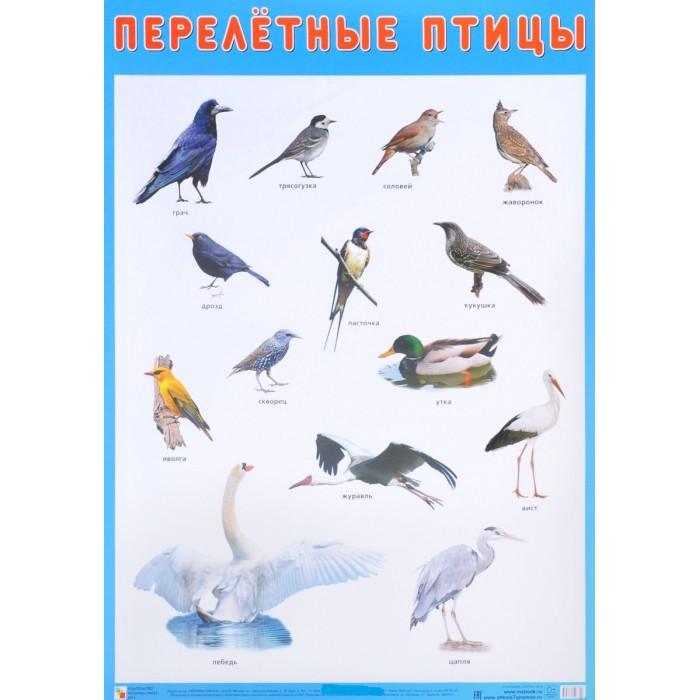 Обучающие плакаты Мозаика-Синтез Плакат Перелетные птицы обучающие плакаты алфея плакат азбука и счет на магнитах