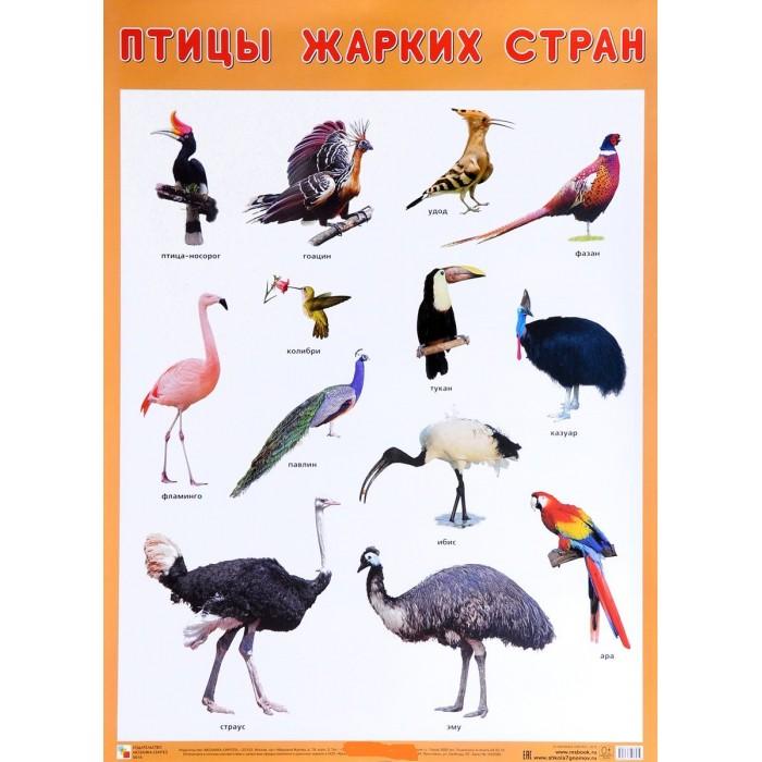 Обучающие плакаты Мозаика-Синтез Плакат Птицы жарких стран обучающие плакаты алфея плакат азбука и счет на магнитах
