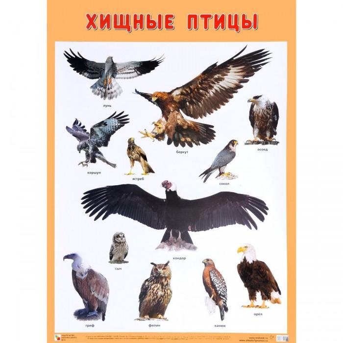 Обучающие плакаты Мозаика-Синтез Плакат Хищные птицы обучающие плакаты алфея плакат азбука и счет на магнитах