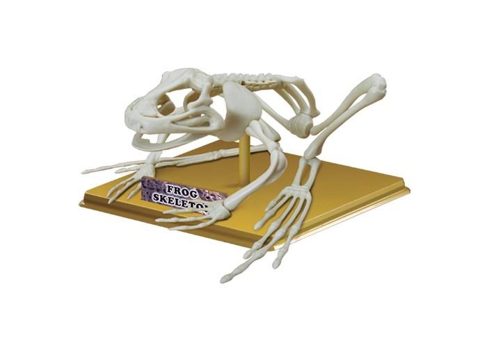 Конструкторы Eastcolight Сборная модель Science Time - Скелет лягушки eastcolight мр 900 микроскоп с панорамной насадкой