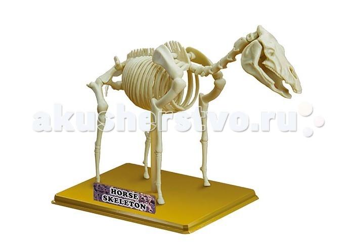 Конструкторы Eastcolight Сборная модель Science Time - Скелет лошади 12 элементов конструкторы eastcolight сборная модель science time скелет трицератопса 14 элементов
