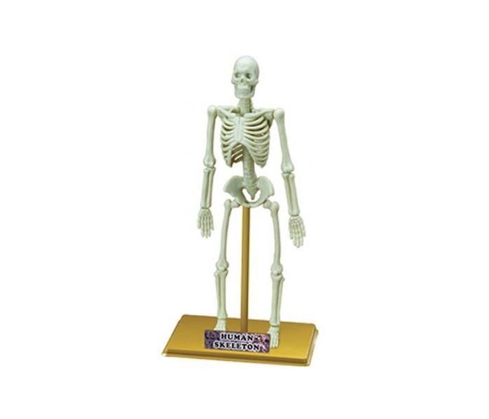 Конструкторы Eastcolight Сборная модель Science Time - Скелет человека 23 элемента конструкторы eastcolight сборная модель science time скелет трицератопса 14 элементов