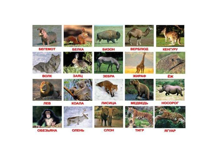 Раннее развитие Вундеркинд с пелёнок Набор обучающих карточек Дикие животные вундеркинд с пелёнок развивающее лото животные