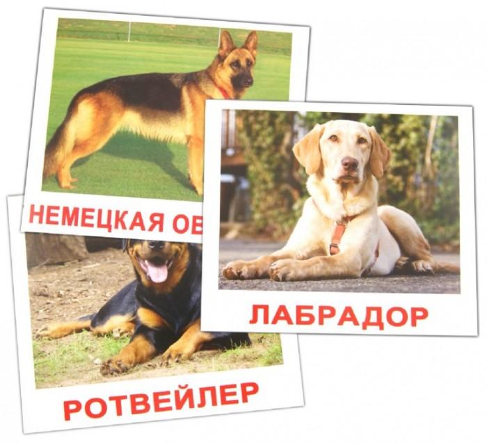 Раннее развитие Вундеркинд с пелёнок Обучающие карточки Породы собак 20 шт. вундеркинд с пелёнок развивающее лото животные