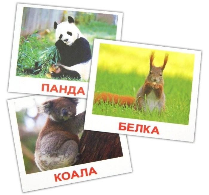 Раннее развитие Вундеркинд с пелёнок Набор обучающих карточек Мини-Дикие животные 40 шт. вундеркинд с пелёнок развивающее лото животные