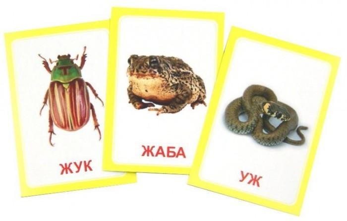 Раннее развитие Вундеркинд с пелёнок Карточки Логопедка Буква Ж 30 шт. вундеркинд с пелёнок развивающее лото животные